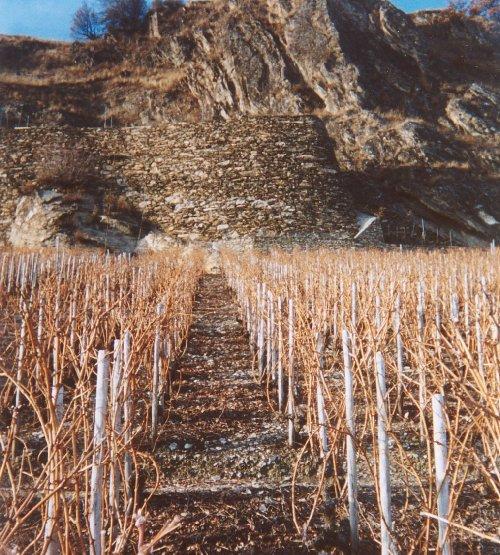 ブドウ畑の2月(スイス)